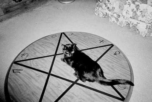 satanblackcat