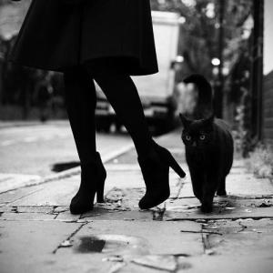 blackcatwomansshoes